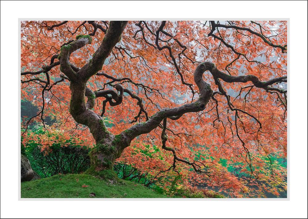 Japanesse-Garden.jpg