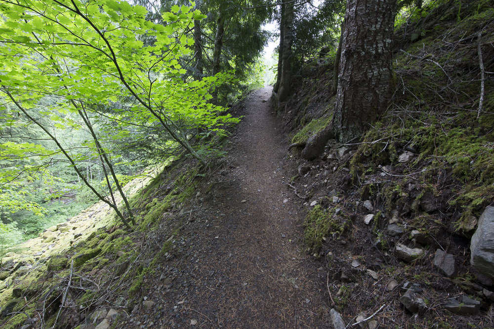 Trail to the viewing area
