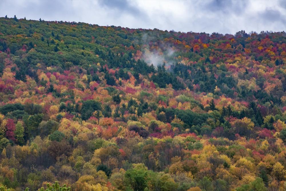 Adirondack Hill 2 (1).jpg