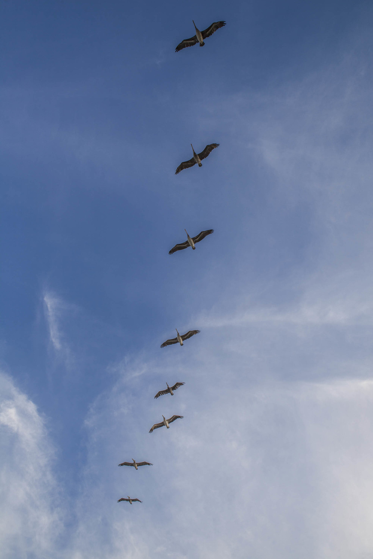 Best Pelican line.jpg