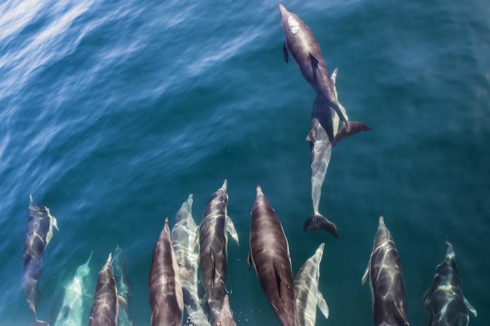 Dolphin Pod.jpg