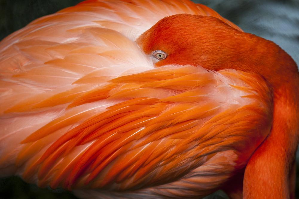 Flamingo (1).jpg