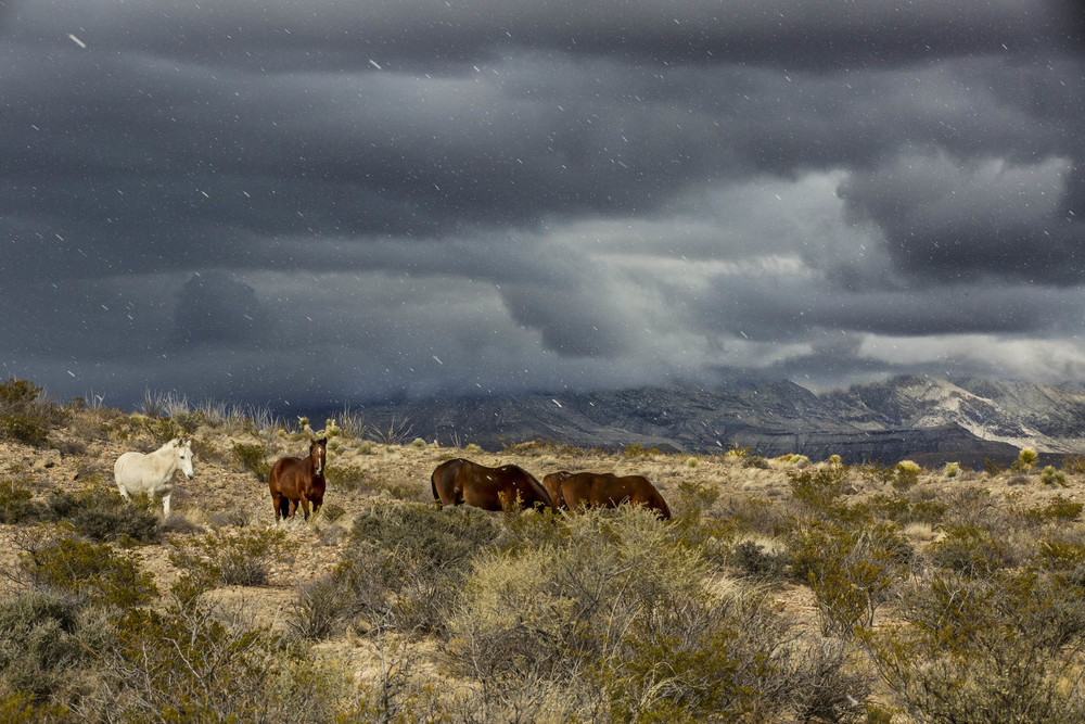 Horses near Guadalupe Mtns.jpg