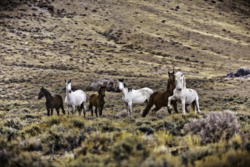 Wild horses (11).jpg