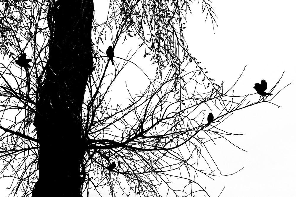 Trees Best (20).jpg