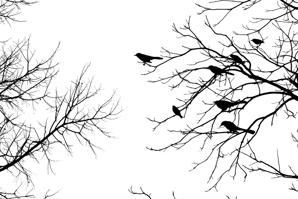 Trees Best (22).jpg