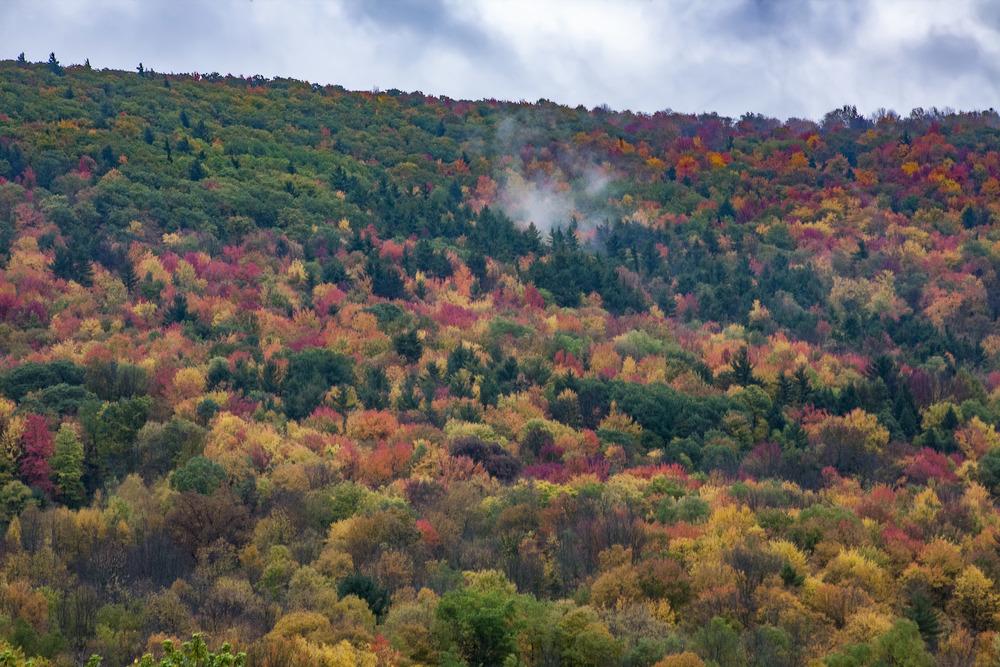 Adirondack Hill 2.jpg