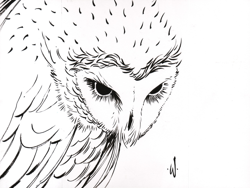 sooty_owl_inks.jpg