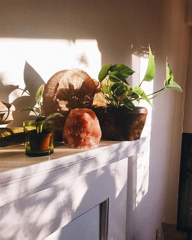 Just like us, my plants are missing the sunshine 😔