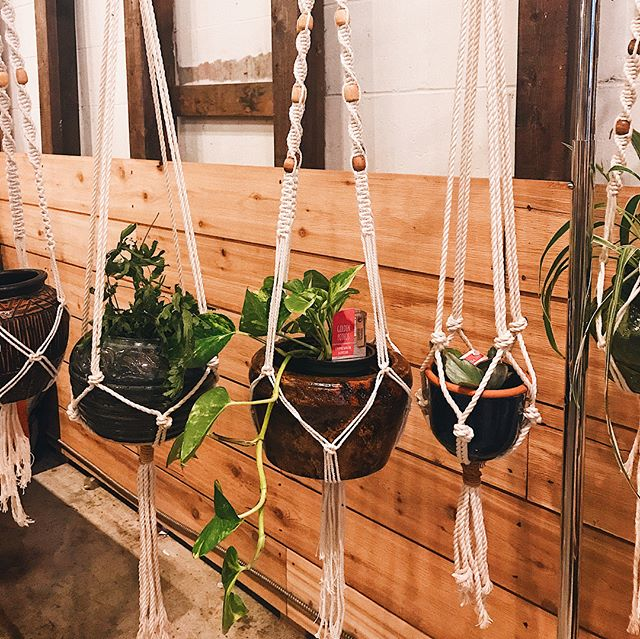 Plant hangers - protecting plants from pets since the 70s 🌿 I've got you covered from $10-$45, DM to inquire #advertisingmyself