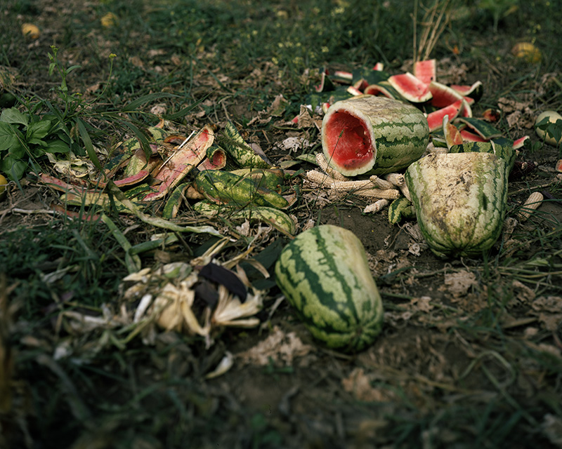 usedwatermelon22x27 copy.jpg
