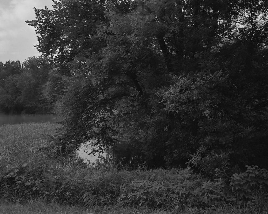 treelandscap.jpg