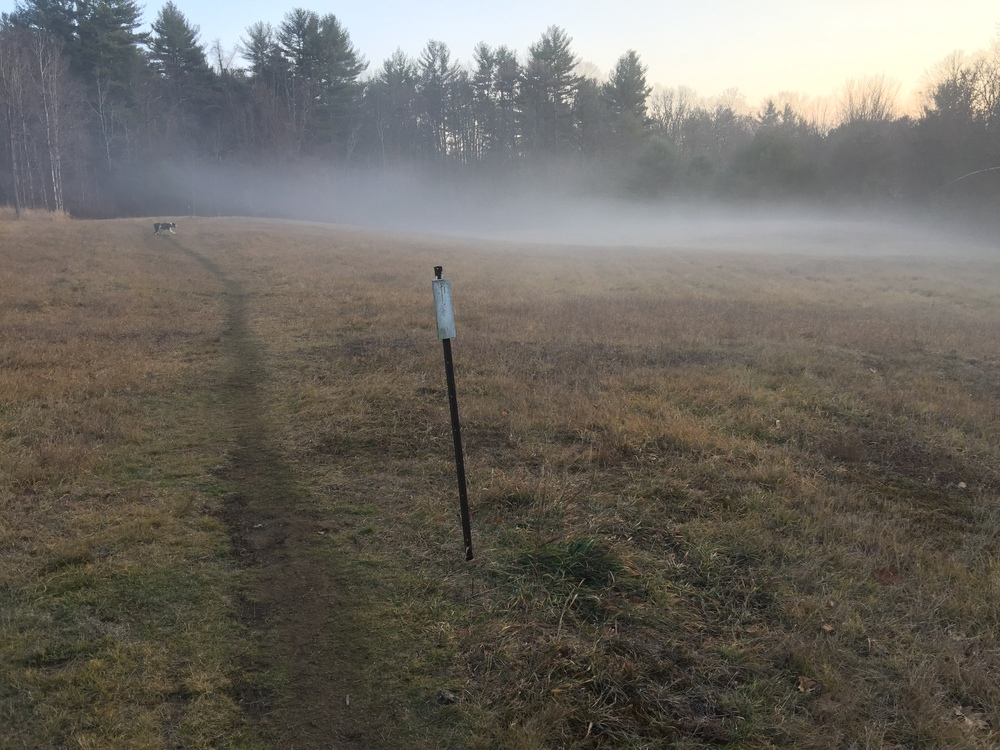 Fog settles in on a field