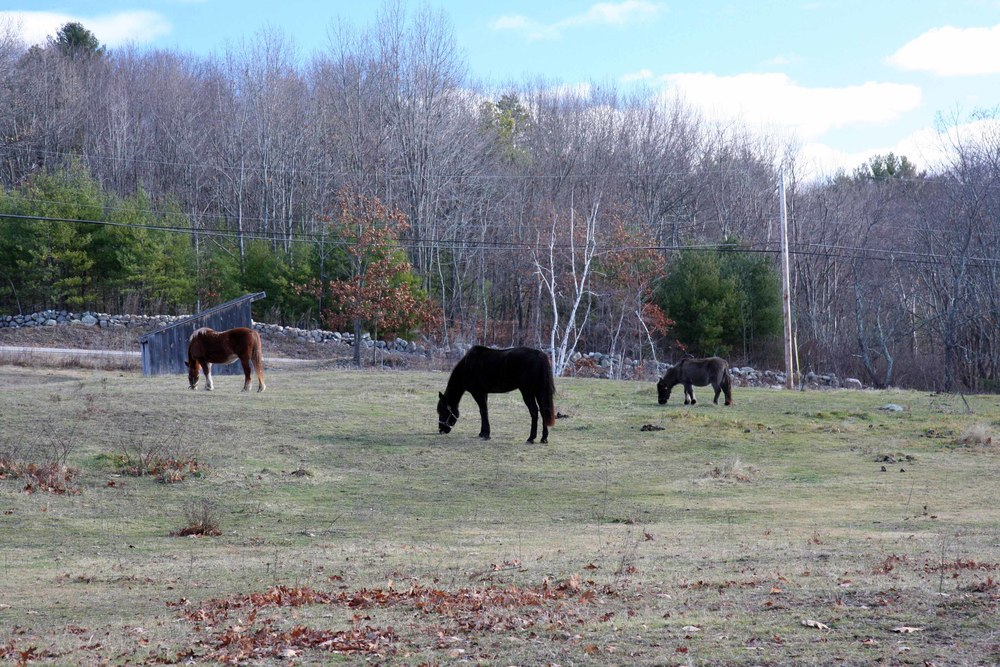 Horses are out in the pasture during the day