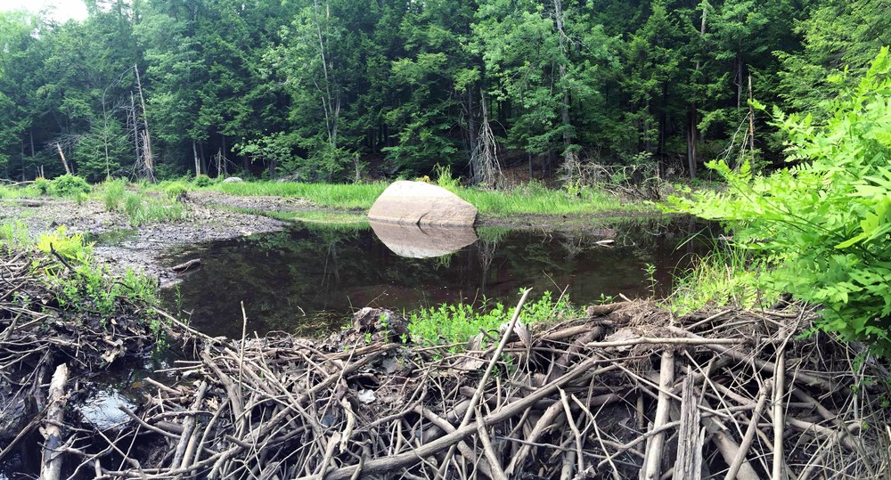 Beaver dam near Gage's Mill