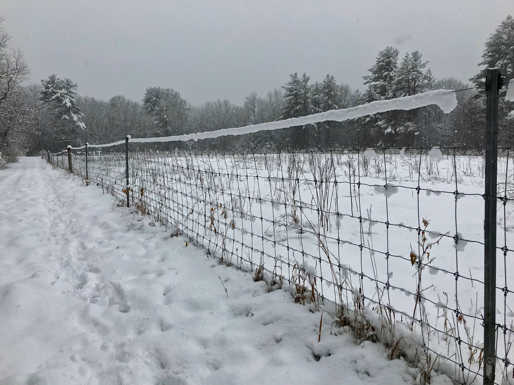 Winter fence.jpg