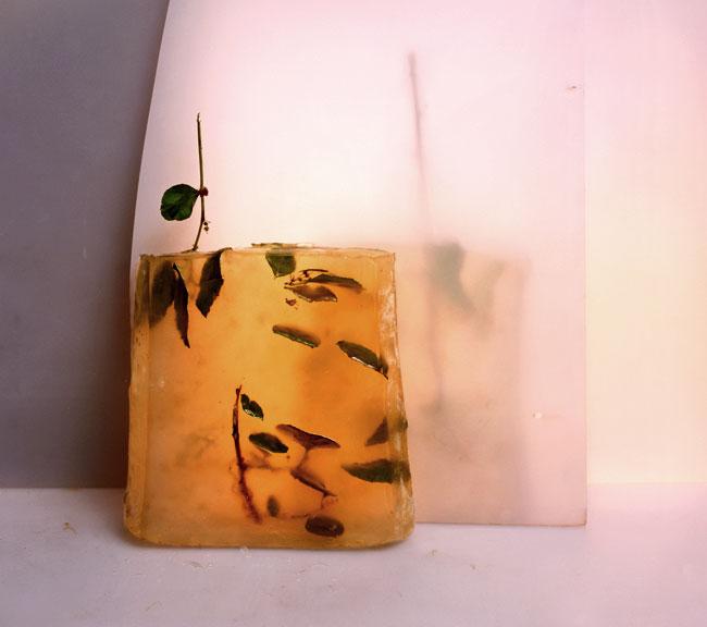 Plant Slice   1999   16X18