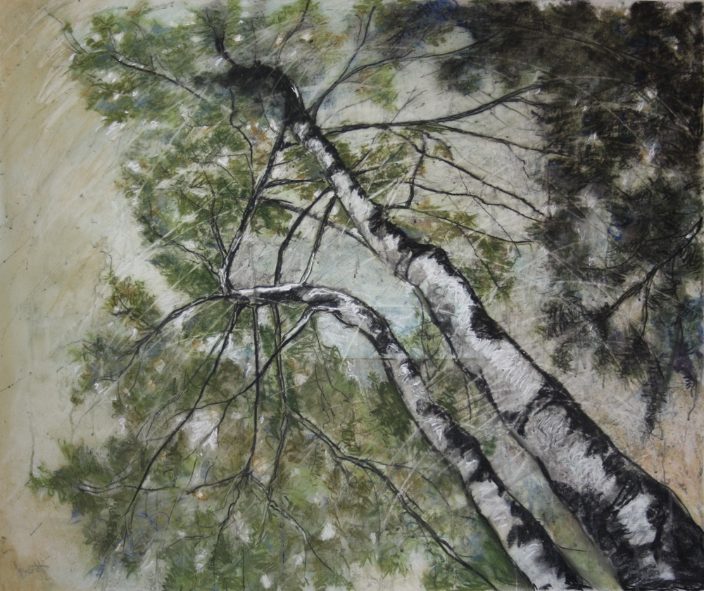 Birches I,  mixed drawing media on drafting film, 32x42""