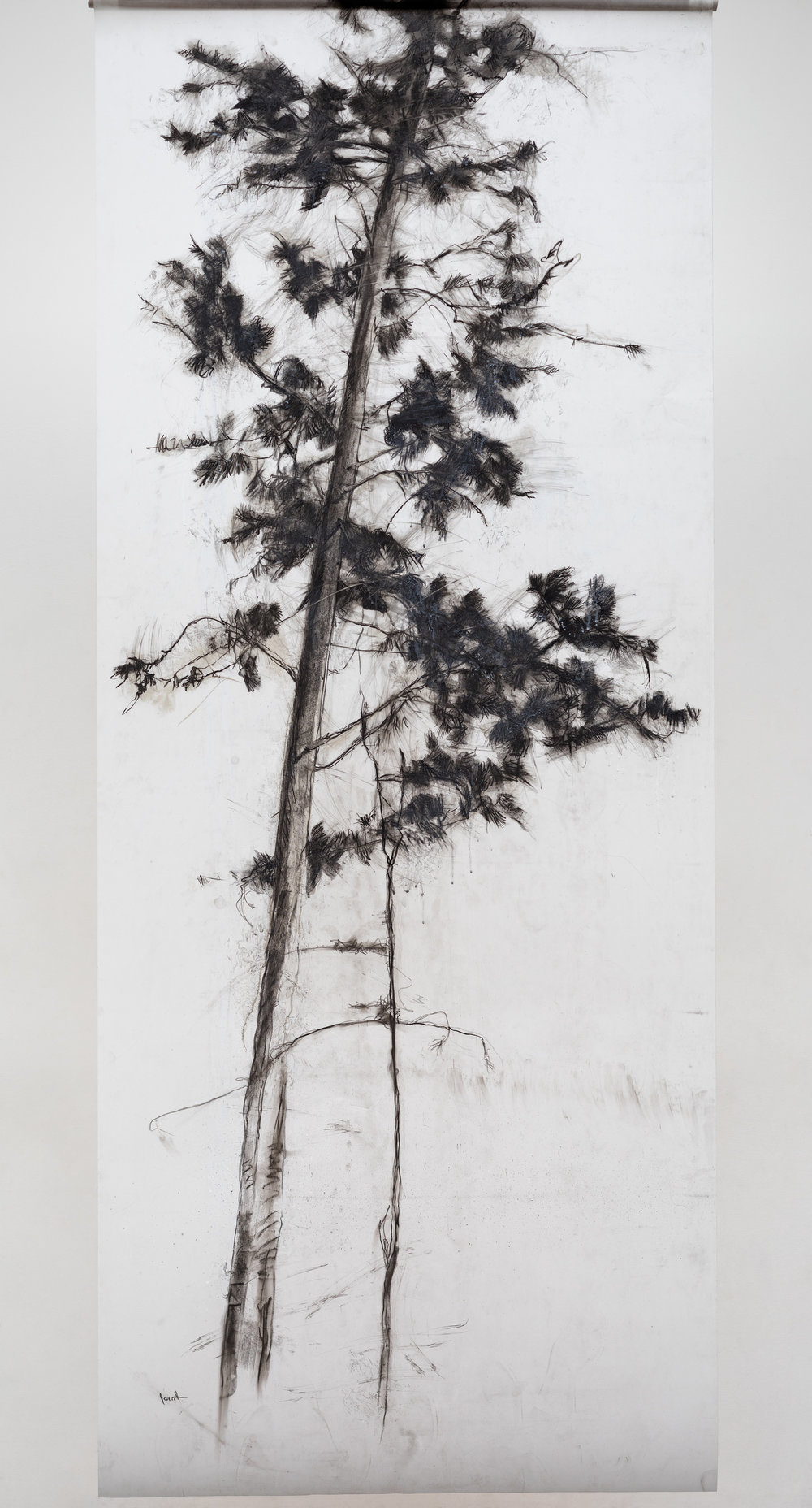 "Understory VIi, charcoal on drafting film, 96x42""   photo credit: Yuri Akuney"