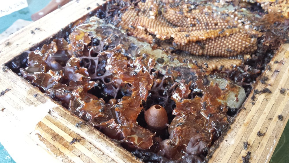 Bee Happy -Gold Coast - Kara and John Froggatt Gold Coast QLD             (in boxes)Phone: 07 5533 5606 or 0413 979 271Email: kaleidoscope@powerup.com.auWebsite: Goldcoastnativebeeservices.blogspot.com.au