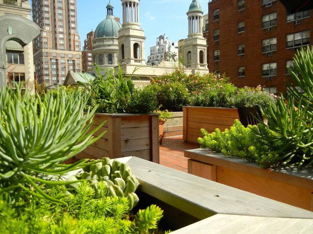 Victory Gardens Rooftop Garden in NYC