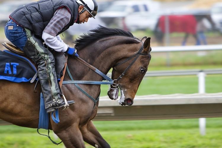 racehorse-419742_960_720.jpg