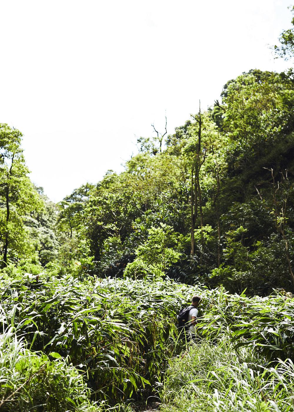 190107_Maui_True_0666.jpg