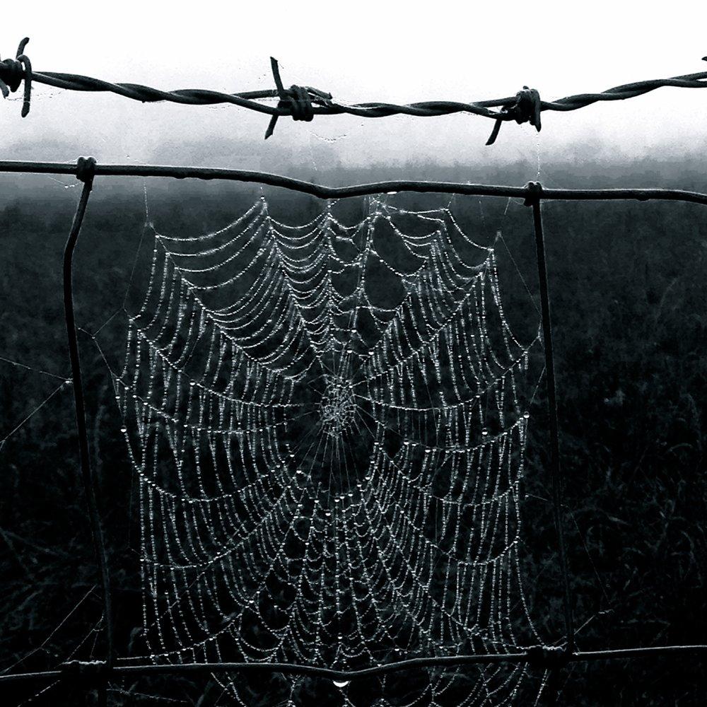 Silver Web .jpg