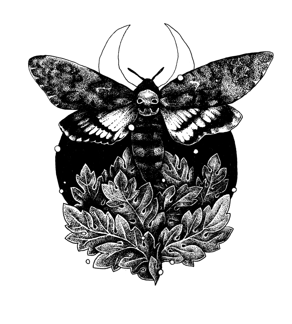 deathhead moth.png