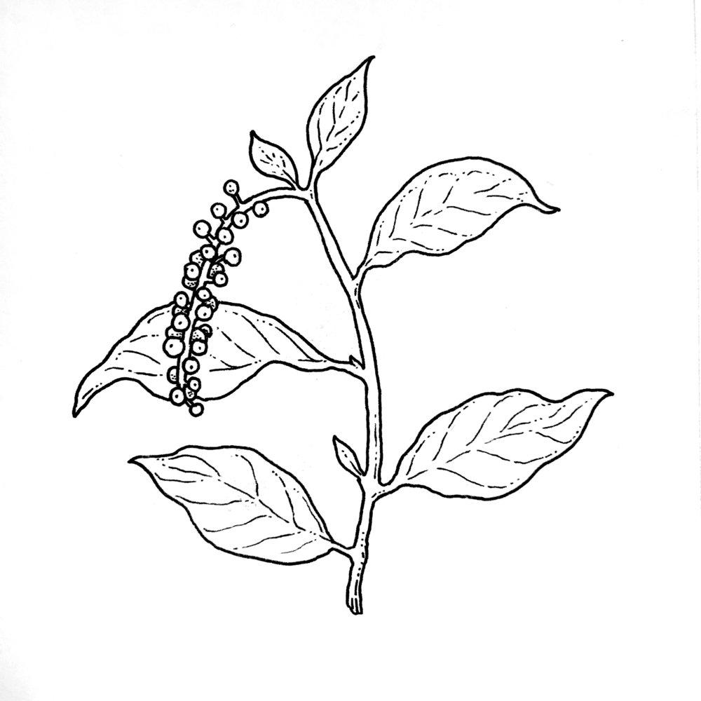 Inktober Poisonous Pokeweed.jpg