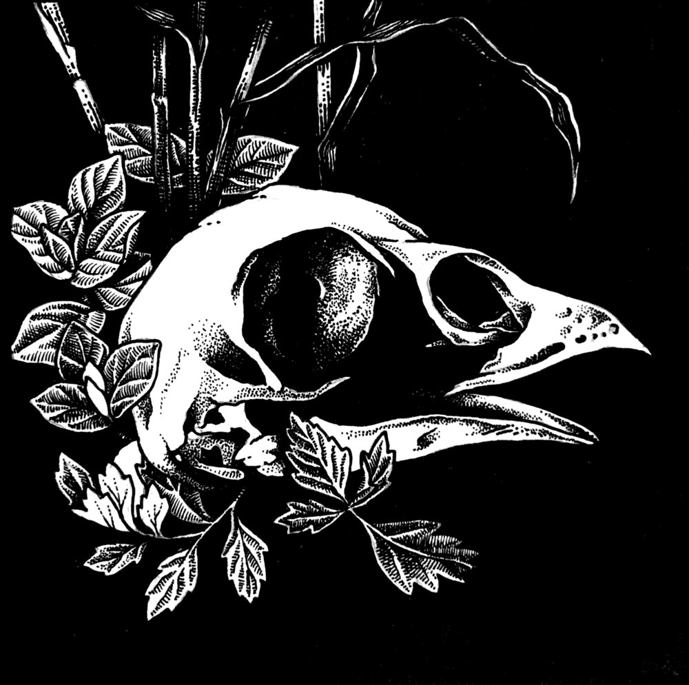 Inktober Animal Ghost Pheasant Skull.jpg