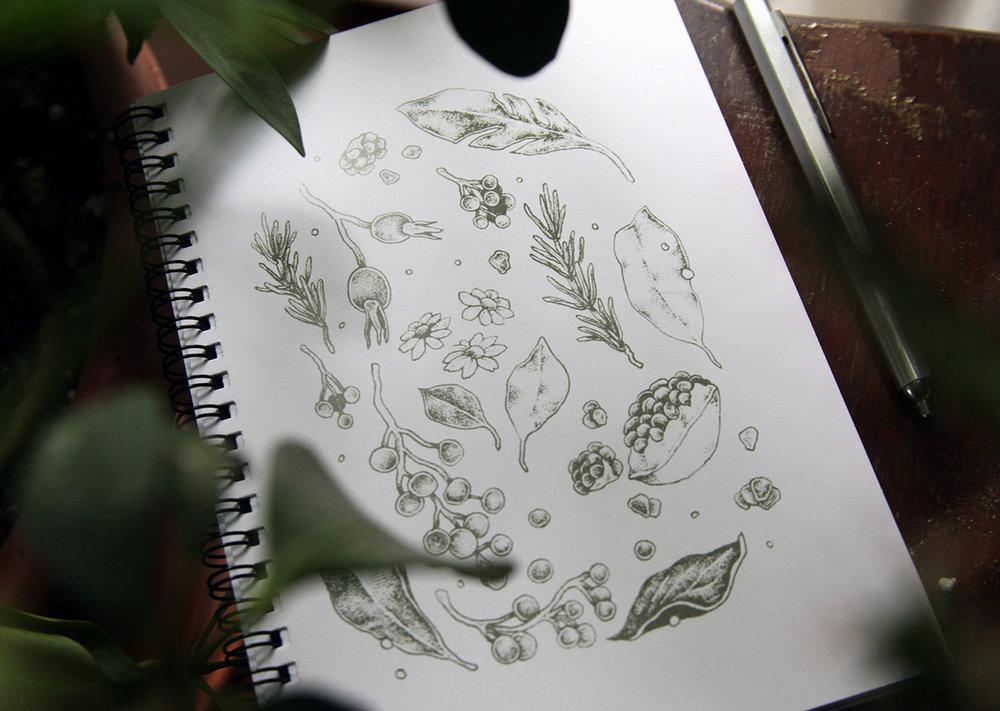 Apothecary Notebook