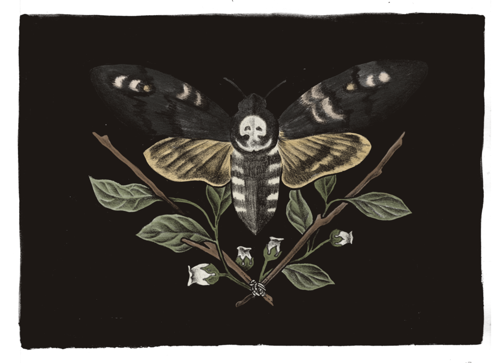 Atropos - Deathshead Moth and Belladonna Illustration