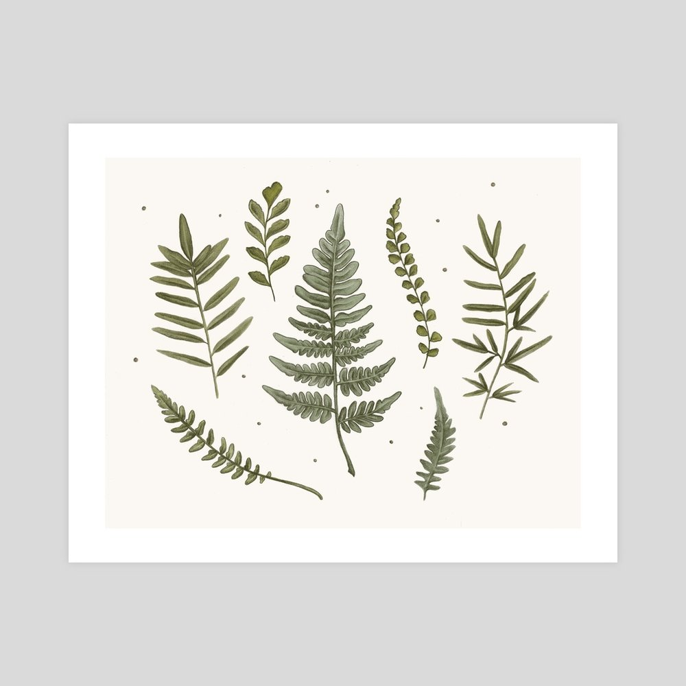 Ferns of Minnesota INPRNT