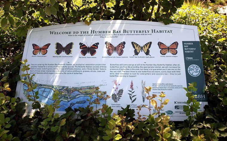 mimi6 Butterfly Habitat.jpg