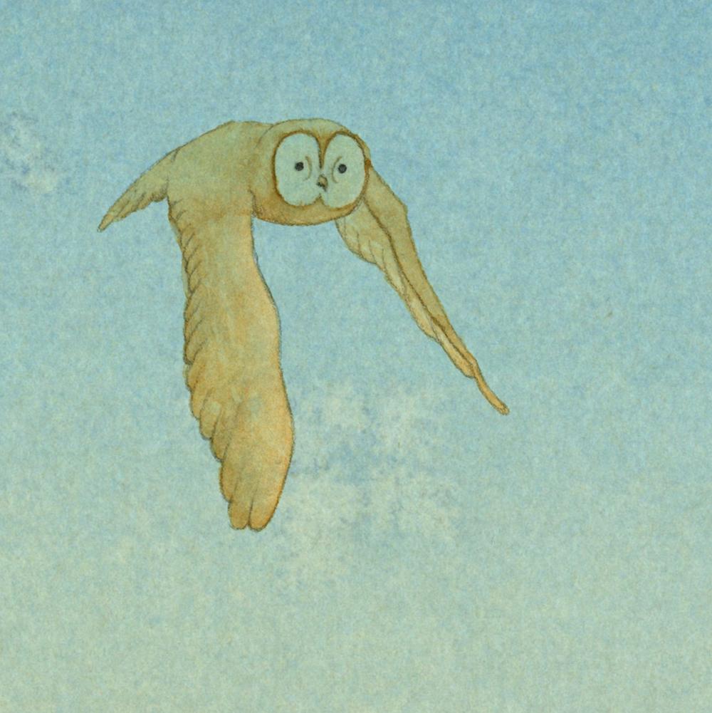 whos-shy-owl-cropped.jpg