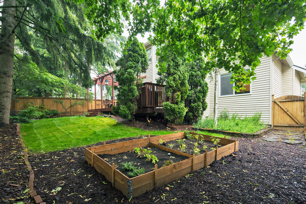 rear gardens.jpg