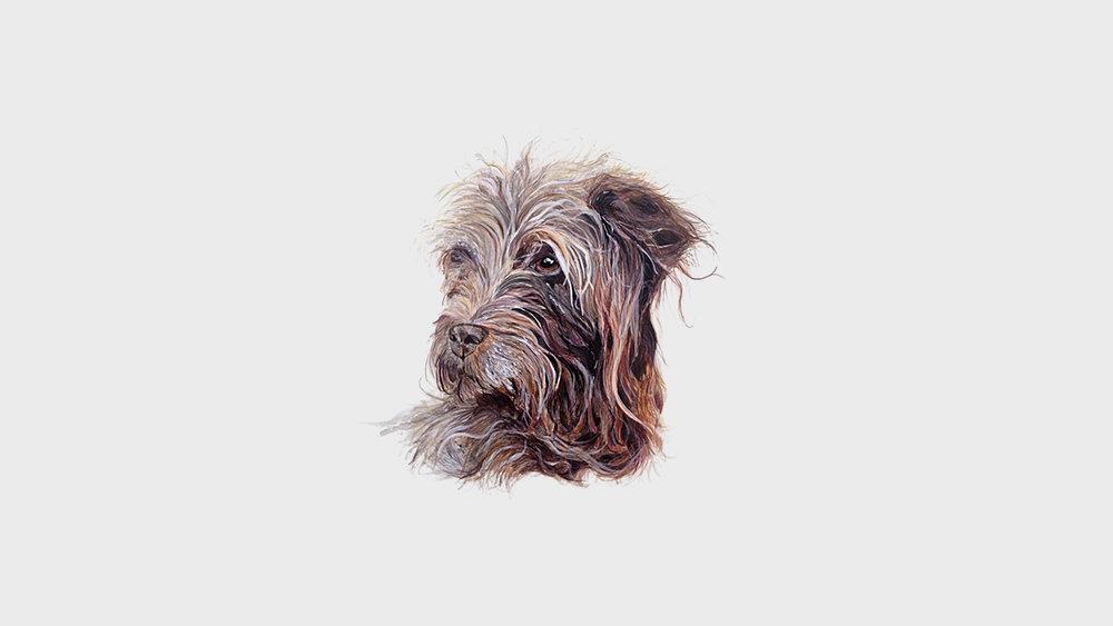 Tessa, the Terrier