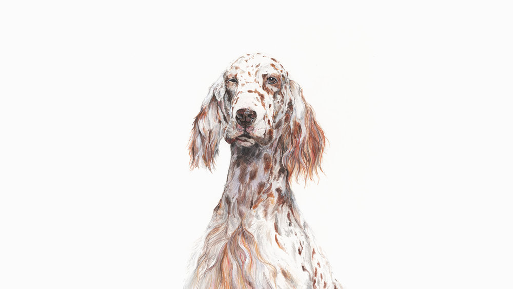 Wolf, the English Setter