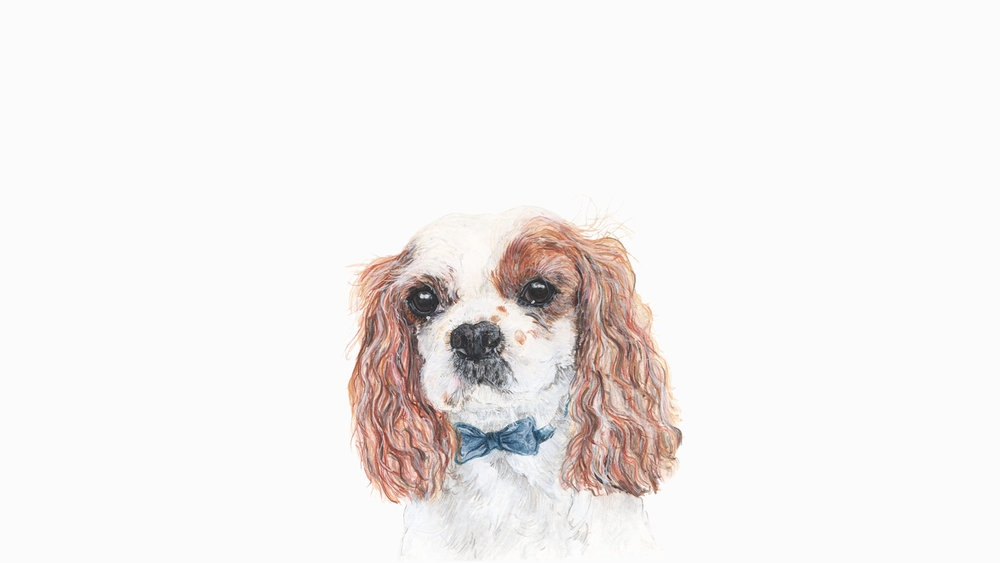George, the King Charles Spaniel