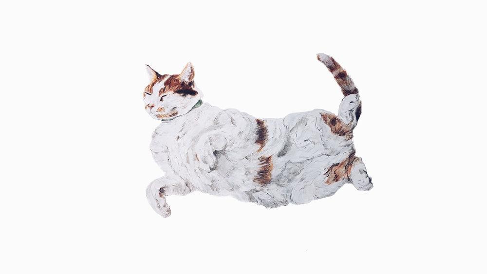 Daniel, the Cat