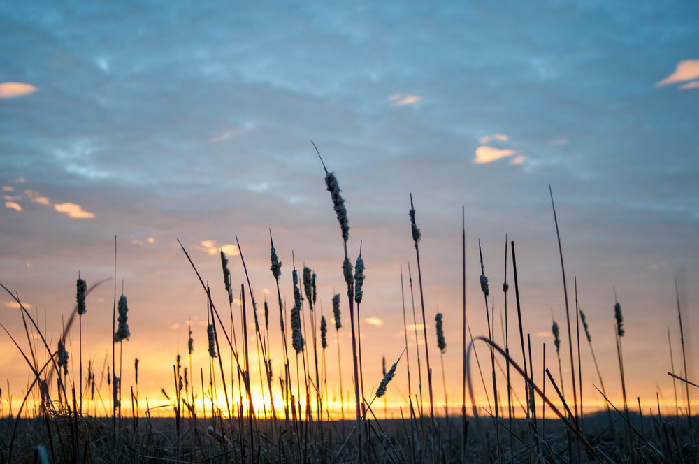Marsh Sunrise.jpg