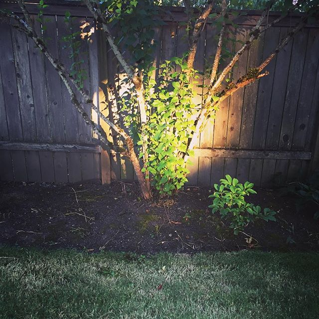 """""""Any patch of sunlight in a wood will show you something about the sun which you could never get from reading books on astronomy. There pure and spontaneous pleasures are 'patches of Godlight' in the woods of our experience. C. S. Lewis #godlight #backyard #1000gifts"""