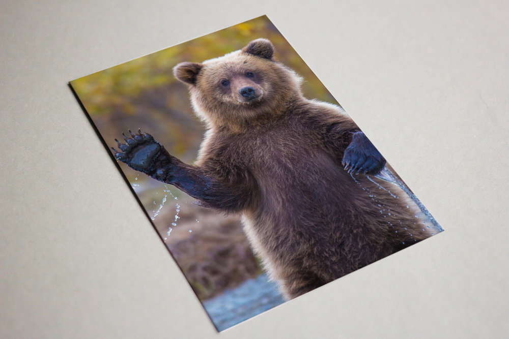 Hey there! - we're your best friend for print. everything you need in one easy to remember place.
