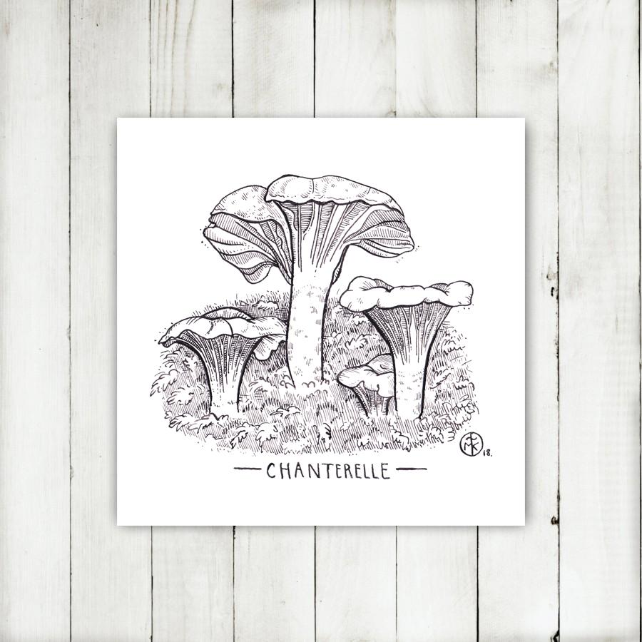 Chanterelle 4.jpg