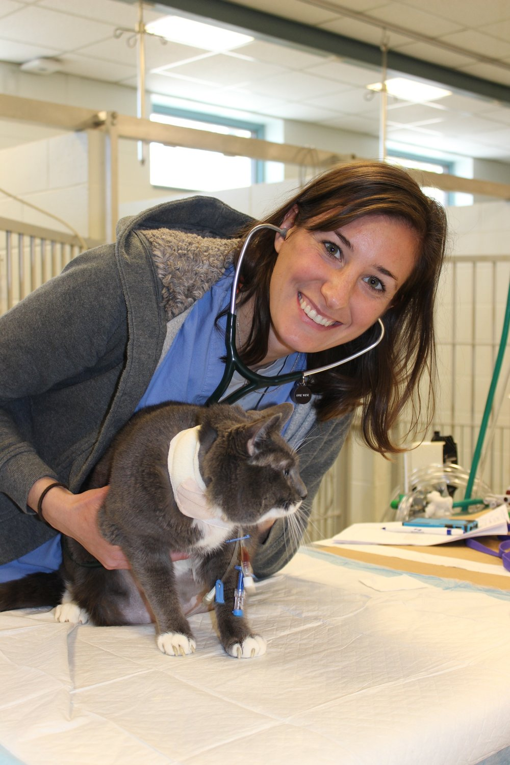 Hank is examined by Dr. Annie Wayne of Angell Animal Medical Center 4 (credit MSPCA-Angell).JPG