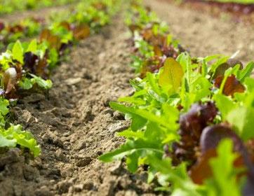 organic_farm1.jpg