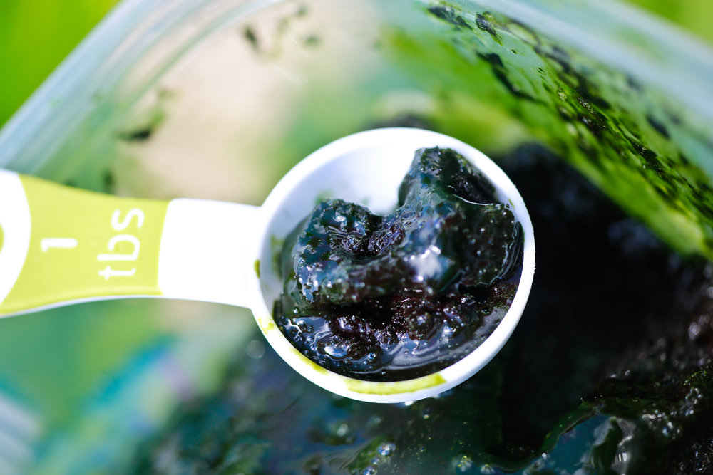 spirulina (11) 2.jpg