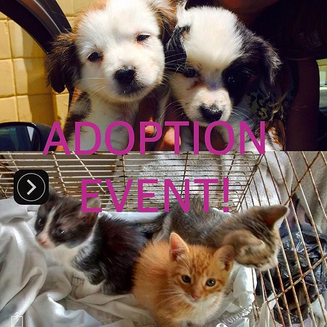ADOPTION EVENT! Come join us tomorrow  at Earthwise Pet Supply 1051 Market Street. There will be Dogs and Cats up for adoption or foster. Take how one of these furry friends starting at 10:30am...See Ya There! #tragictomagic #tragictomagicfoundation #earthwisepetsupply @earthwisepetev #adoptdontshop #adoptadog #adoptacat  #saveananimal #sandiego #california #nonprofit #animalrescue #furbuddybliss #whosavedwho #cats #dogs #rescue #dogsofinstagram #catsofinstgram #comeoutandplay