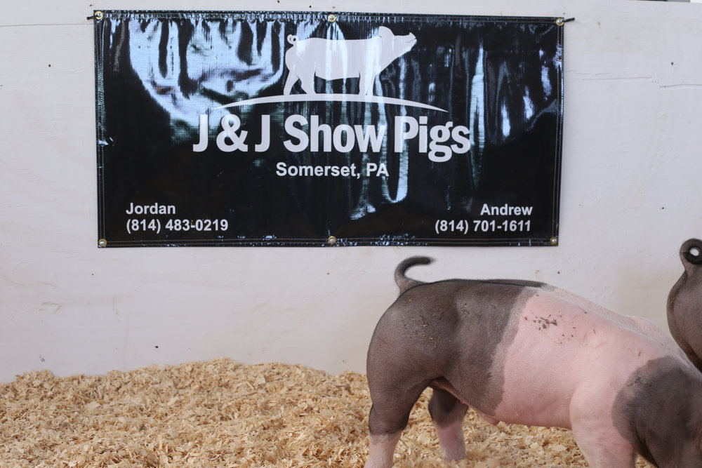 SOLD - J&J SHOW PIGS SPRING AUCTION - SOMERSET COUNTY, PENNSYLVANIA